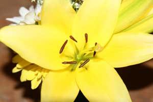 Yellowd