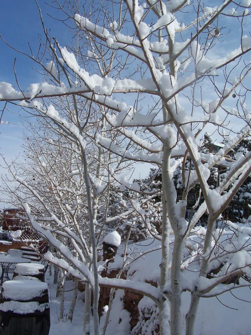 Jan07_snowfall_012