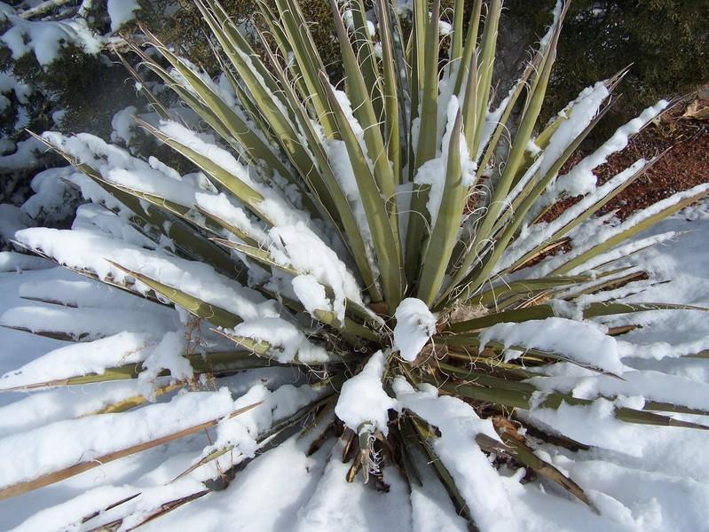 Jan07_snowfall_017