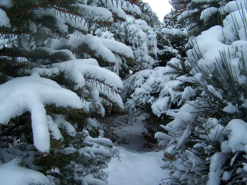 Jan07_snowfall_035
